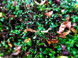 automne3.jpg